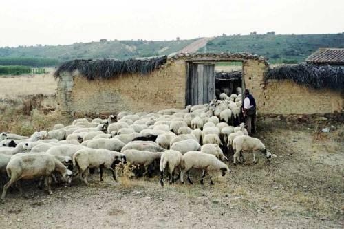Porta delle pecore